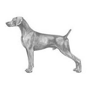 Why the Weimaraner Breed Standard is Important