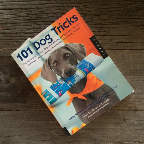 www.barrettweimaraners.com - 101 Dog Tricks