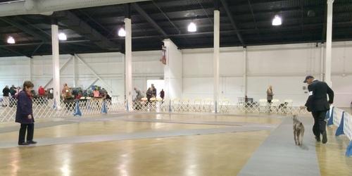 www.barrettweimaraners.com - Costa Mesa Shows - Friday - 08