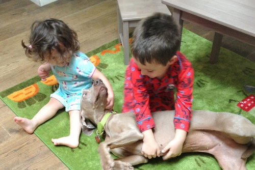 www.barrettweimaraners.com - Kids and Puppies - 1