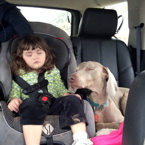 www.barrettweimaraners.com - Kids and Puppies -13
