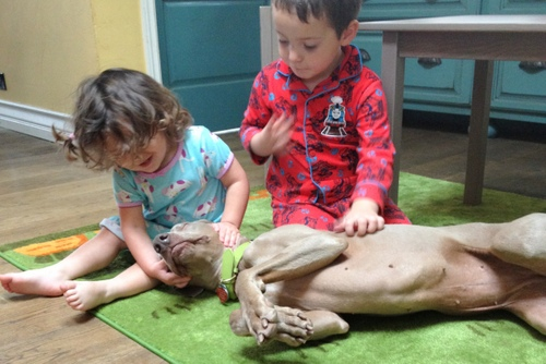 www.barrettweimaraners.com - Kids and Puppies - 2