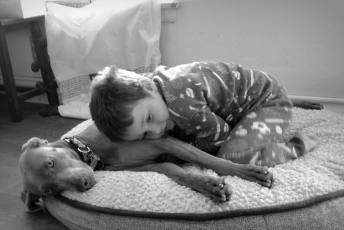 www.barrettweimaraners.com - Kids and Puppies - 3