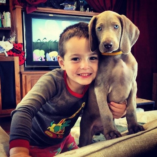 www.barrettweimaraners.com - Kids and Puppies - 7