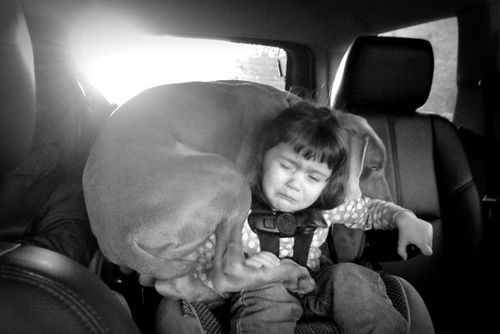 www.barrettweimaraners.com - Kids and Puppies - 9