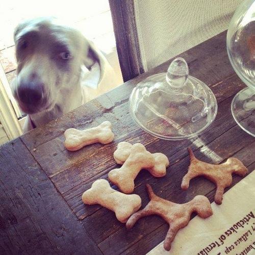 www.barrettweimaraners.com - Weimaraner Cookies - December 2013