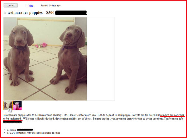 www.barrettweimaraners.com-Craigslist-Ad-Backyard-Puppies-with-Splayed-Feet_600