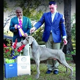 The Westminster Kennel Club 138th Annual All Breed Dog Show – Weimaraner Results