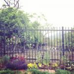 www.barrettweimaraners.com - Tubular Steel Fence