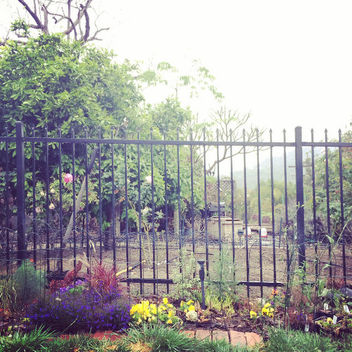 Fencing Recommendations for Weimaraners