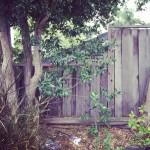 www.barrettweimaraners.com - Wooden Fence