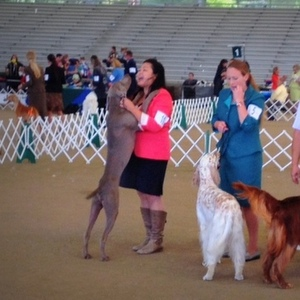 Show News | Angeles Canyon Dog Club Shows – April 19, 2014