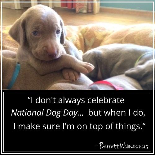 www.trailingfriday.com - National Dog Day 2014