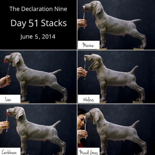 The Declaration Nine – Seven Week Stacks