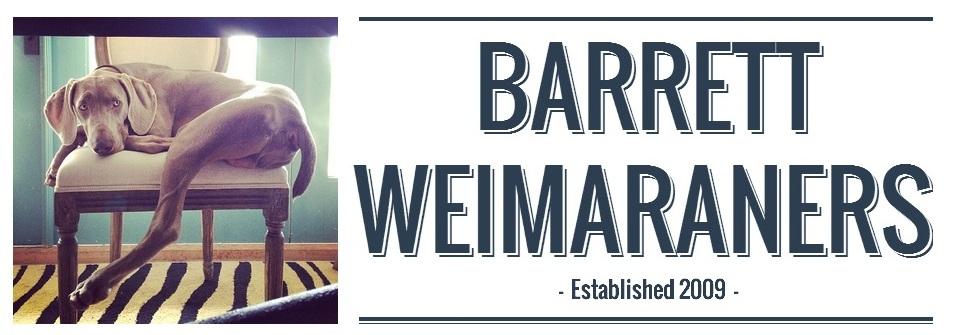 Barrett Weimaraners