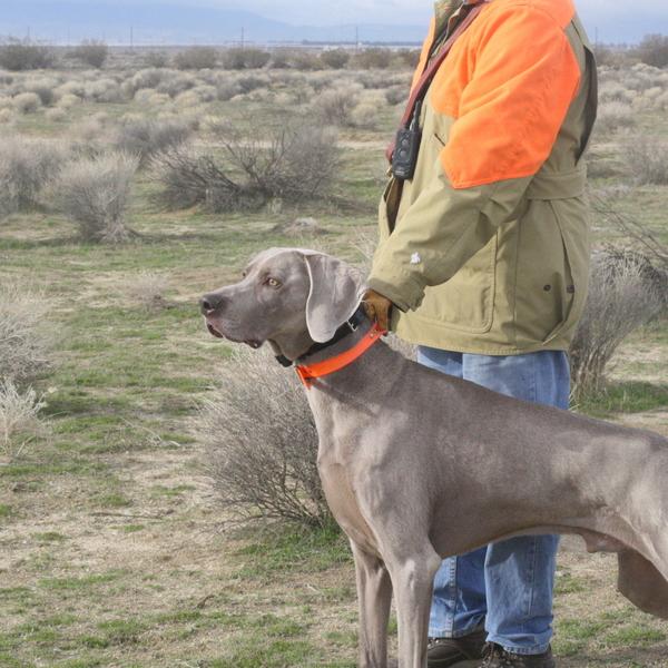 Barrett Puppies in the Field