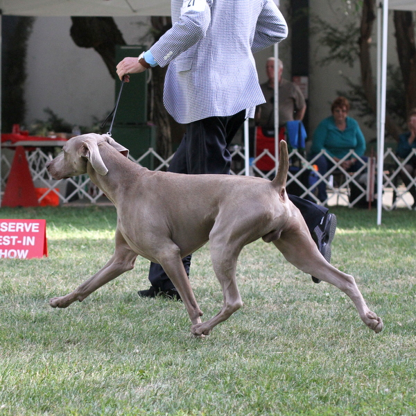 Show News – Coyote Hills Kennel Club