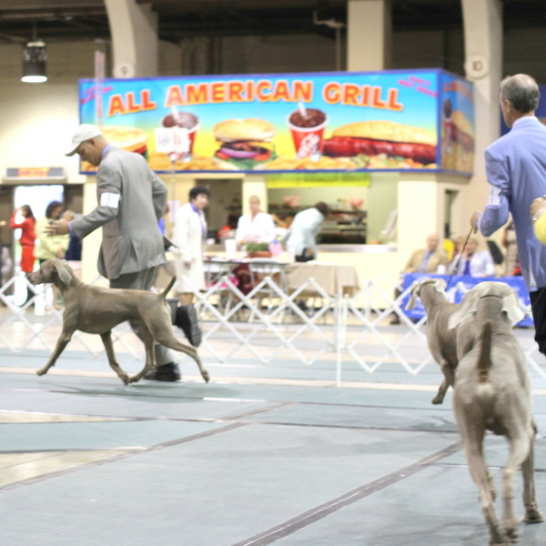 Show News – Boulder's First Best of Breed at the Mission Circuit