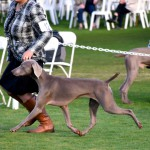 www.barrettweimaraners.com - 2016-01-11 - Bug - Movement - Square