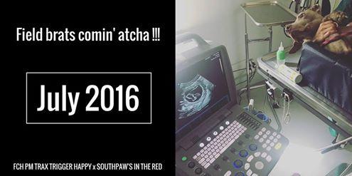2016-06-03_Mika-Pregnancy-Ad