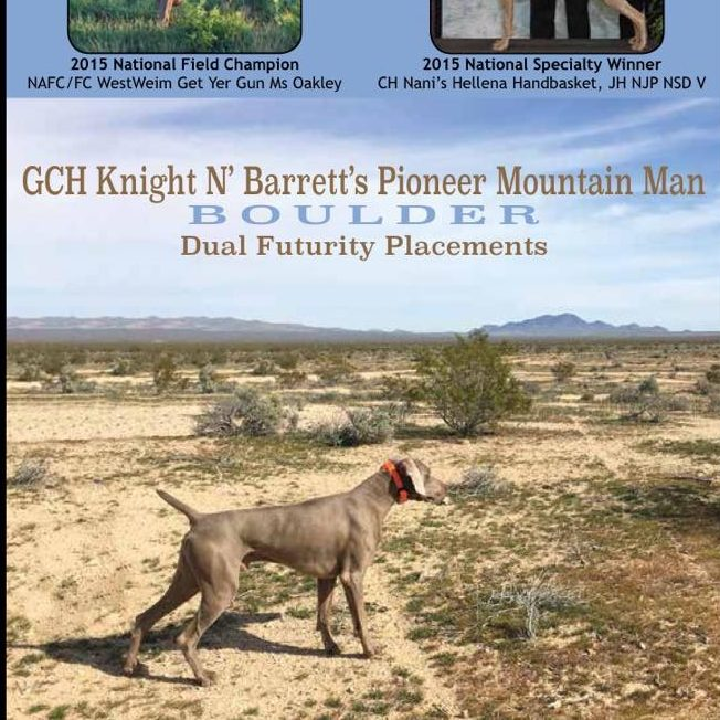 "GCH Knight n' Barrett's Pioneer Mountain Man, ""Boulder"""