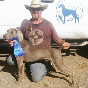 Trax Even Steven Wins the Open Puppy Stake