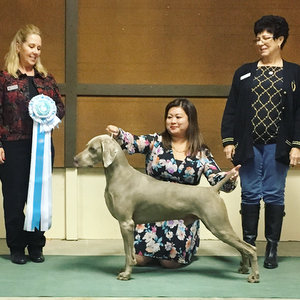 2017 WCA Winter Specialty Show Results