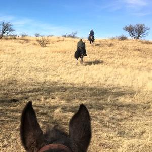 Road Trip # 01 of 2018: Sonoita, AZ