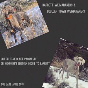 2019 Blaise x Tennessee Litter