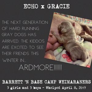 2019 Echo x Gracie Wild Wild Six Litter Photo Journal