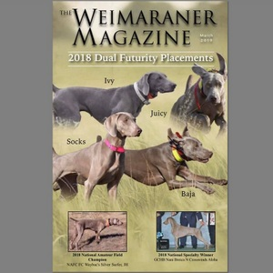 Baja Earns a Cover on the Weimaraner Magazine