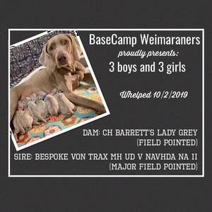www.barrettweimaraners.com_2019-10-04_Gracie-Puppies