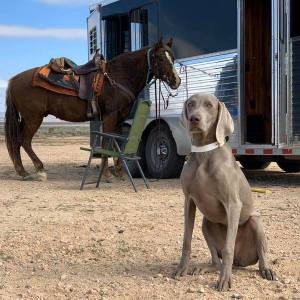 The Barrett Collective – German Wirehaired Pointer Club of SoCal Field Trial