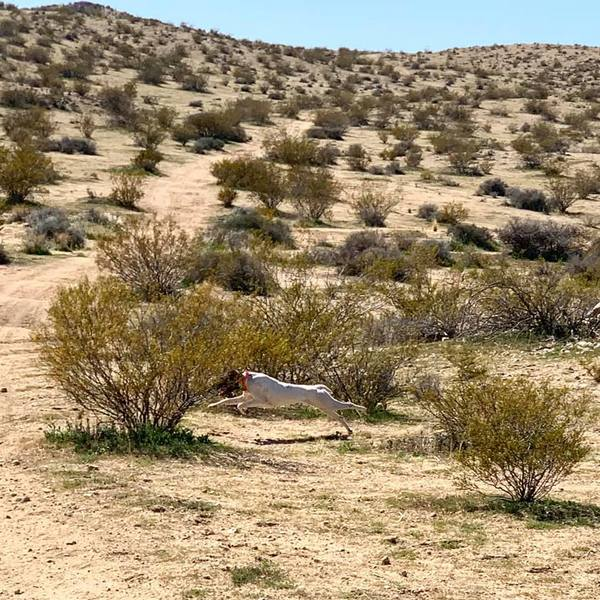 www.barrettweimaraners.com_2020-02-23_17-Squirt