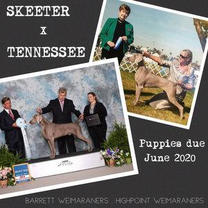 Announcing the Winter 2021 Skeeter x Tennessee Litter