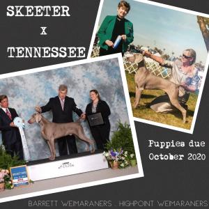 Skeeter x Tennessee Litter Announcement