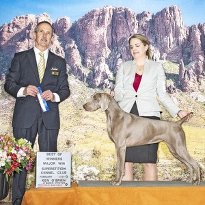 The Barrett Collective – Superstition Kennel Club Dog Shows