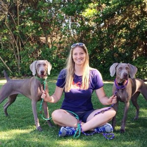 Your Weimaraner Puppy between Three Months and Six Months