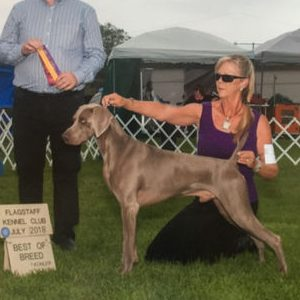 Best of Breed for Cowboy at the Flagstaff Kennel Club Dog Shows