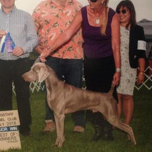 Zane Earns a Pair of 5pt Majors at the Flagstaff Kennel Club Dog Shows