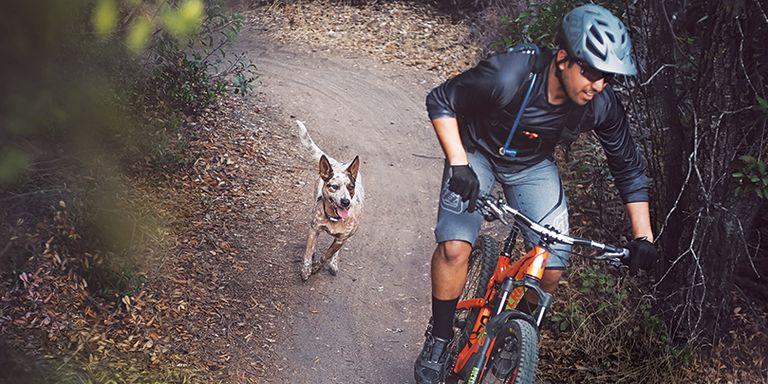 Dog Chasing Bicycle