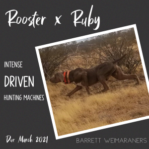 Rooster x Ruby – Breeding Announcement_300