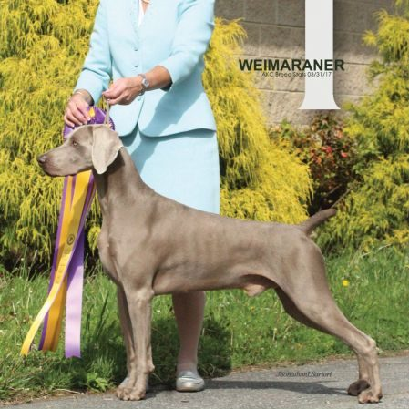 """GCH Camelot's Luxe Winter's Waltz, """"Swede"""""""