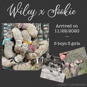 Wiley x Sookie Litter