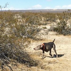 2020 SWC All-Breed Field Trial