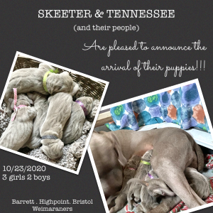 Skeeter x Tennessee Litter