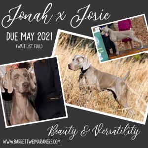 Jonah x Josie Litter – Arrived May 19, 2021
