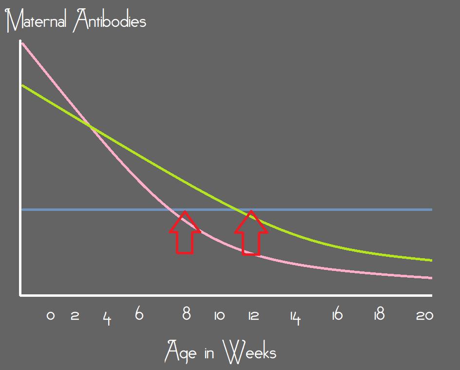 Maternal Antibodies – Marked