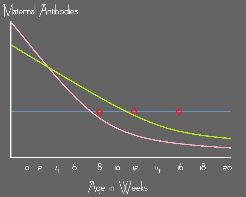 Maternal Antibodies – Vaccination