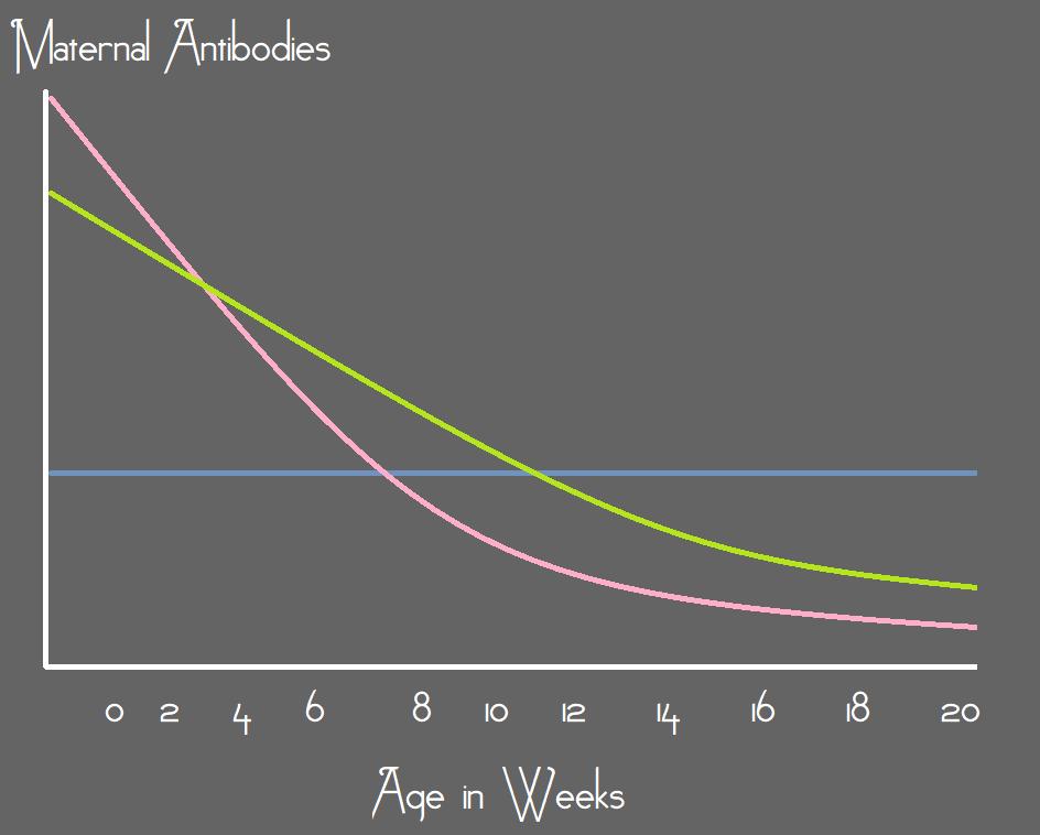 Maternal Antibodies